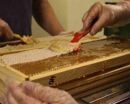 Hunajan päältä poistetaan vahakerros ennen linkousta