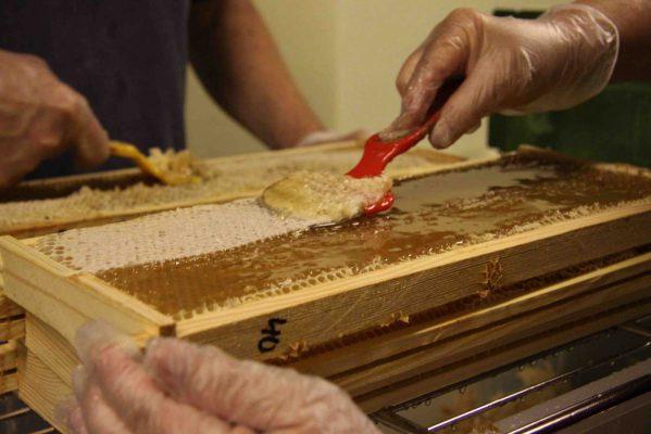HunajakehienKuorintaaP